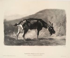 Fainting Goat History